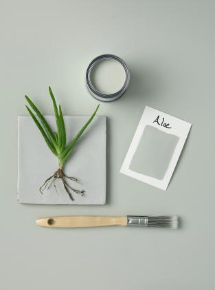 Rust-Oleum Paint Aloe